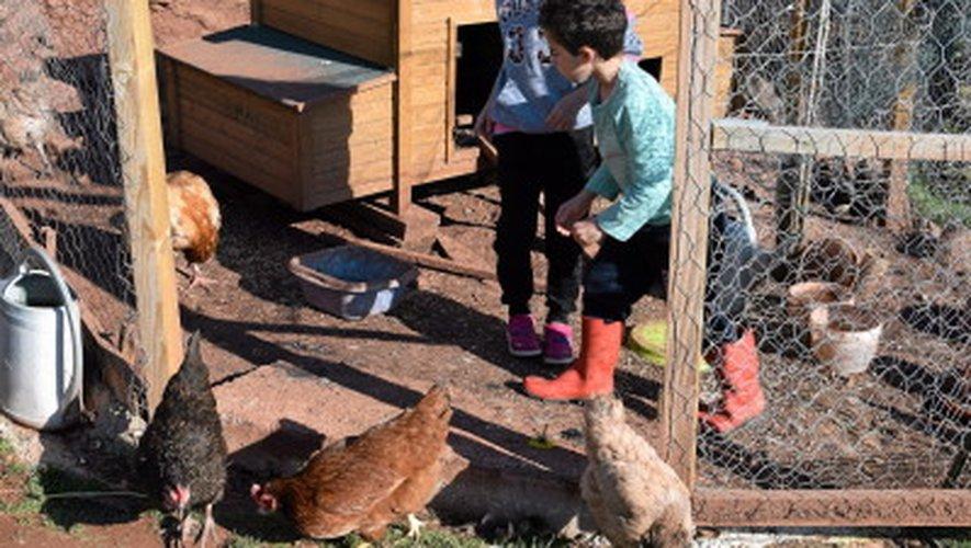 Comment adopter des poules auprès de Rodez agglomération?