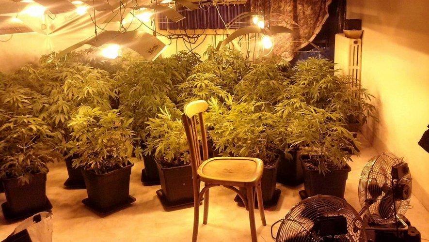 "Saint-Jean-de-Bruel : trois cultivateurs de cannabis ""indoor"" interpellés"