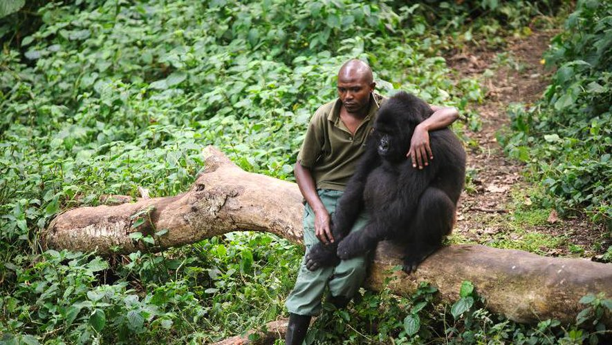 Patrick Karabaranga, gardien dans le parc national des Virunga, la plus vieille réserve naturelle d'Afrique, dans l'est de la République démocratique du Congo le 17 juillet 2012