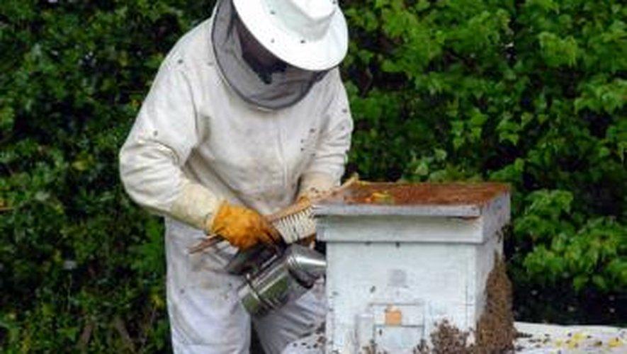 La baisse de la production en 2014 a paradoxalement été accompagnée par un regain d'intérêt pour l'apiculture, qui se traduit par une hausse du nombre d'apiculteur.