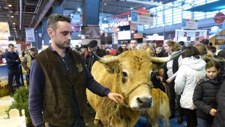 Danoise, une aubrac Danoise de 8 ans et de 793 kg, appartient à Greg De Barrio de Laguiole.
