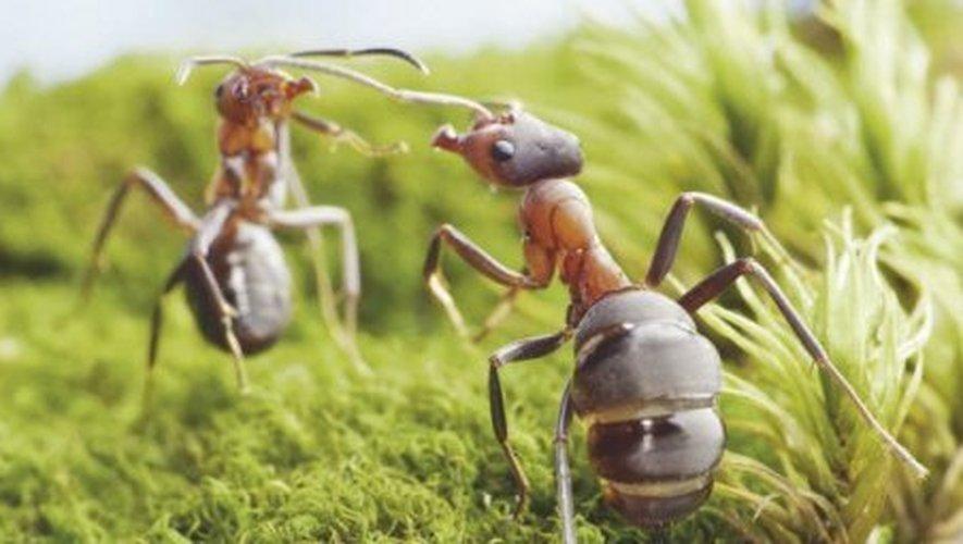 A Micropolis, plus de 70 espèces d'insectes attendent petits et grands.