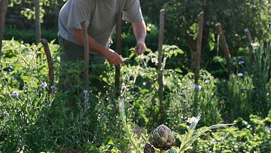 Dans les jardins aveyronnais, les fruits et légumes de saison semblent plutôt à l'heure.