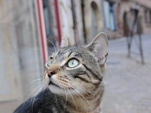 Conques : le chat qui hérisse l'office du tourisme