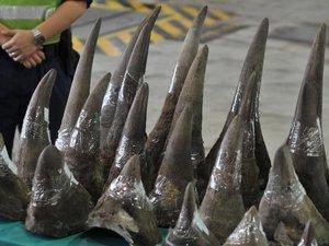 Rhinocéros: inquiétude pour des spécimens d'Afrique introduits en Chine