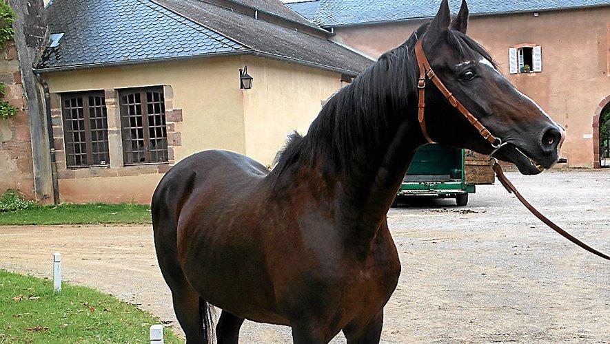 Dormane, un cheval exceptionnel qui vient de s'éteindre à l'âge de 31 ans.