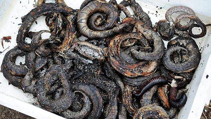Tarn : un entrepôt de reptiles ravagé par les flammes