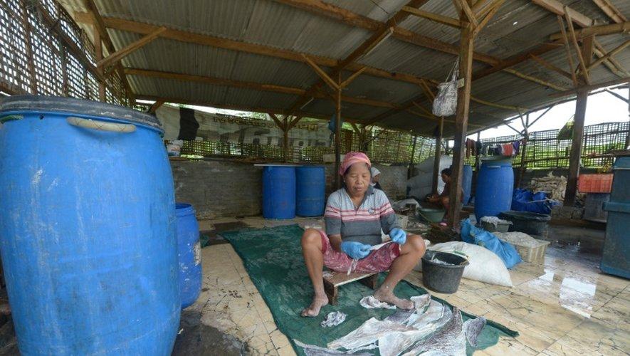 Des travailleurs indonésiens sèchent du poisson à Sidoarjo sur un terrain de la zone ravagée par un volacan de boue en 2006