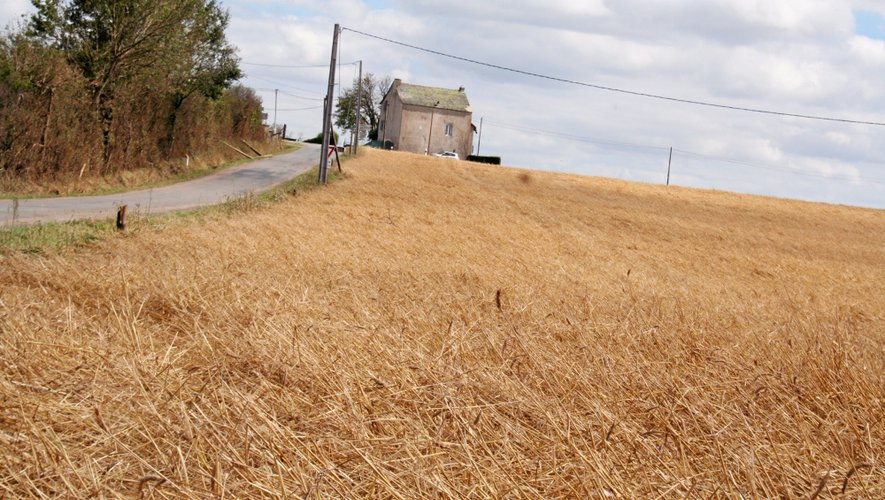 Orages dans l'Ouest-Aveyron : c'est aussi une calamité agricole