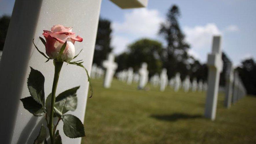 Une rose dans un cimetière américain de Normandie à l'heure du souvenir du 70e anniversaire du débarquement, le 31 mai 2014