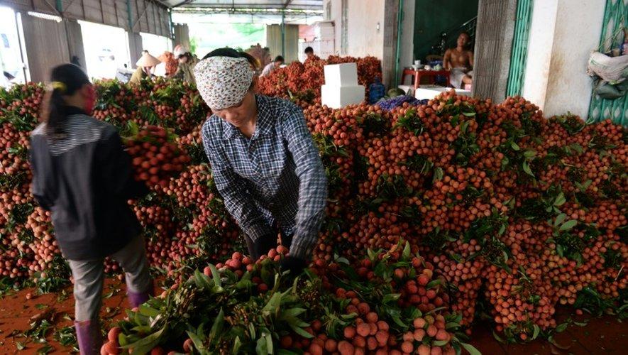 Des femmes disposent des litchis sur les étals d'un marchand de fruits, à Luc Ngan dans le nord du Vietnam, le 16 juin 2015
