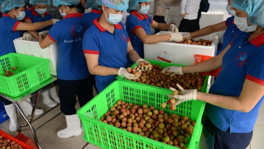Des ouvriers conditionnent des litchis destinés à l'exportation, dans une usine du district de Thanh Ha, au nord du Vietnam, le 7 juin 2015