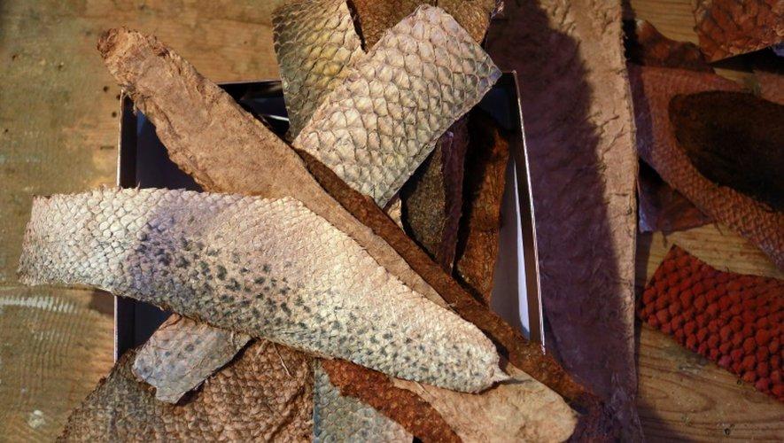 Des cuirs de poisson produits par la start-up Femer dans l'atelier de La Teste-de-Buch, en Gironde, le 7 juillet 2015