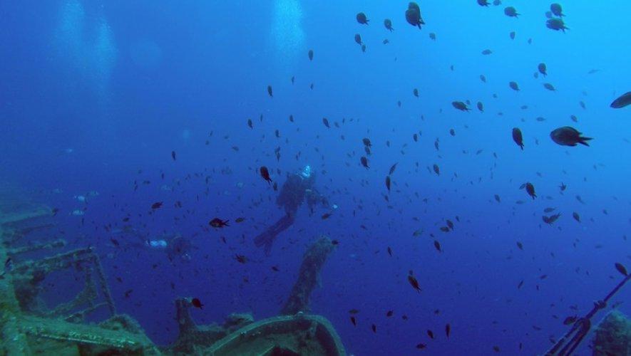 Des plongeurs explorent l'épave du ferry Zenobia le 28 juin 2015 au large de Chypre où il a sombré il y a 35 ans