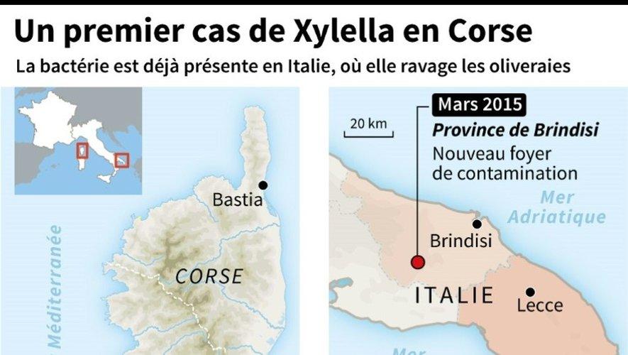 Un premier cas de Xylella en Corse