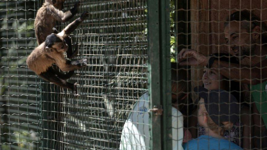 Un employé du parc zoologique de Spata près d'Athènes nourrit un singe, le 23 juillet 2015