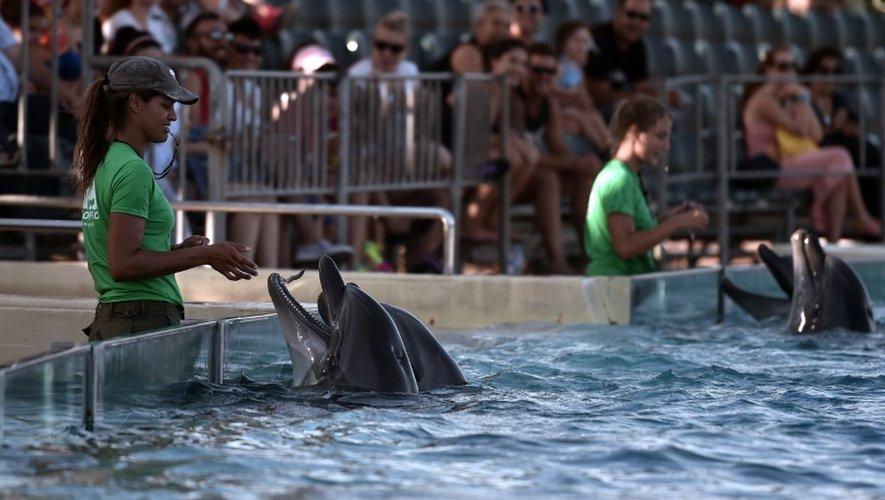 Des dauphins jouent dans le parc zoologique de Spata près d'Athènes, le 23 juillet 2015