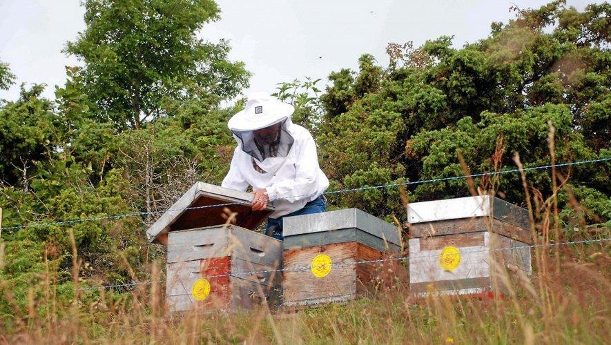 Les apiculteurs aveyronnais à l'honneur ce week-end.