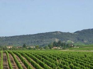 Pic Saint-Loup - Arpenter la route des vins entre syrah, grenache et mourvèdre