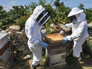 """Insecticides: l'Assemblée interdit les néonicotinoïdes, """"tueurs d'abeilles"""""""