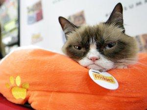 News des chats célèbres : Grumpy Cat, Oskar, Choupette Lagerfeld…