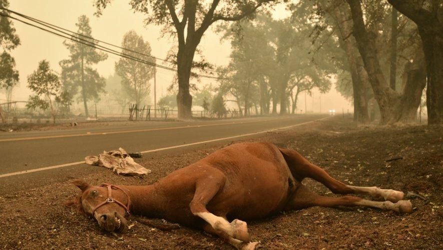 Un cheval mort le 14 septembre 2015 à Middletown dévastée par les incendies en Californie