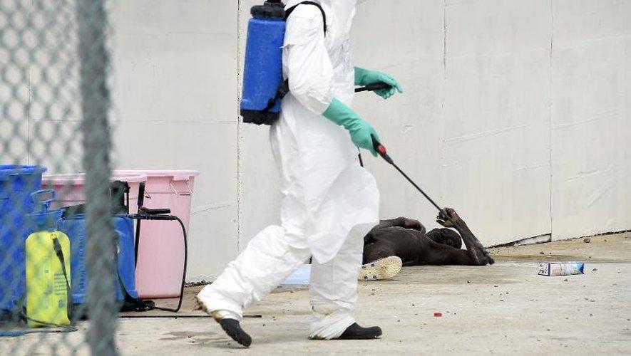 Un travailleur sanitaire aux côtés d'un homme suspecté d'avoir contracté le virus Ebola, à Monrovia le 2 octobre 2014
