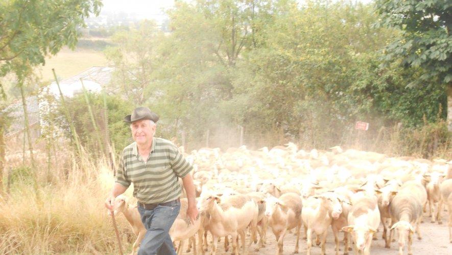 A Sévérac-d'Aveyron, 700 brebis qui ne passent plus