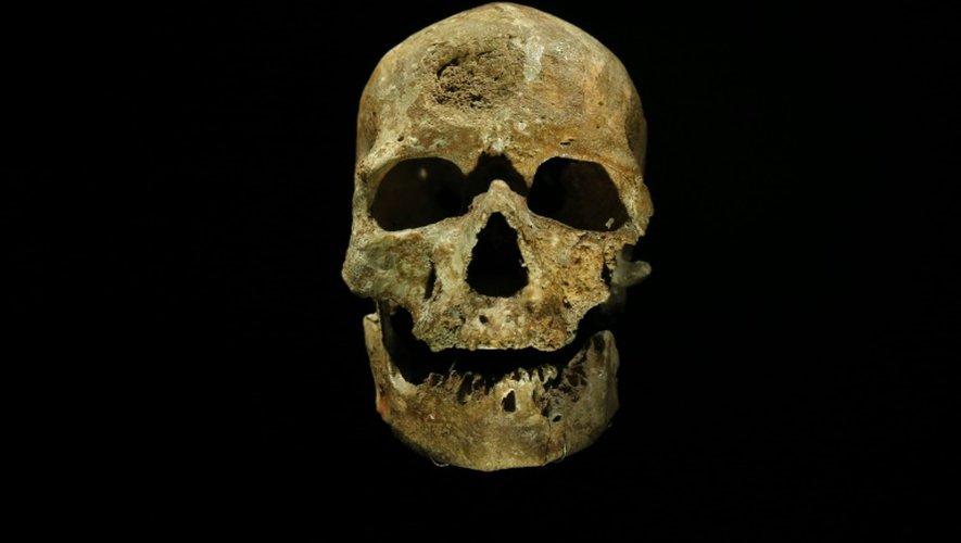 Le crâne de l'homme de Cro-Magnon, au musée de l'Homme de Paris, le 13 octobre 2015