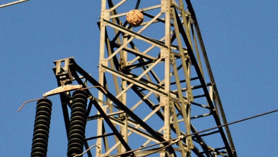 Le nid de frelons particulièrement voraces détruit à l'aide d'un drone et d'un produit toxique.