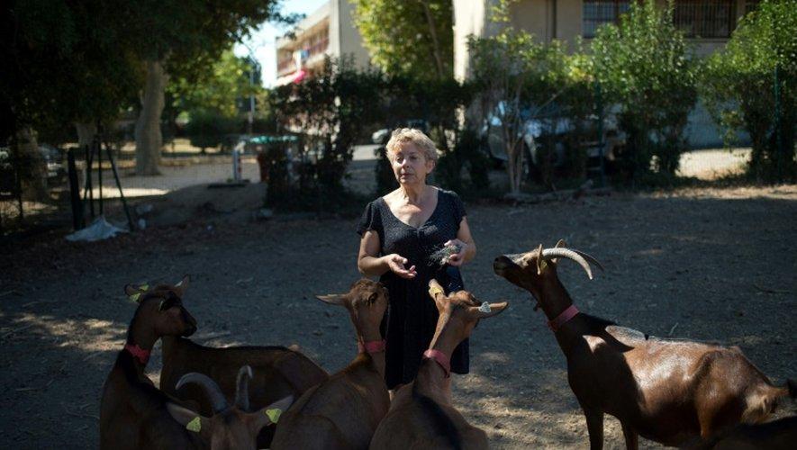 """L'agricultrice Marie Maurage nourrit ses chèvres dans la ferme """"La tour des pins"""" à Marseille, le 26 août 2016"""