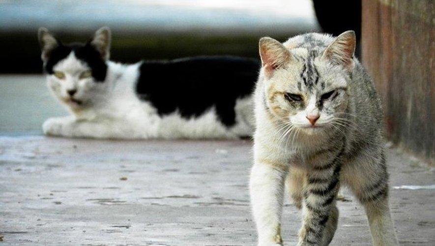 Rodez Agglo : la campagne de stérilisation des chats errants débute