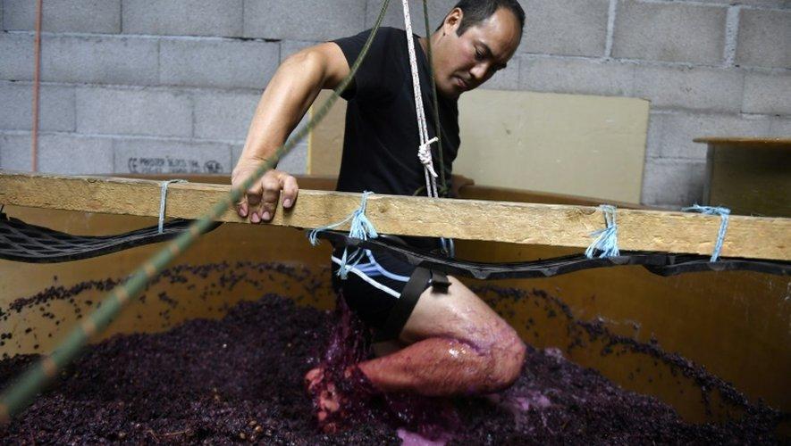 Le viticulteur japonais  Hirotake Ooka un harnais dans sa cuve pour remuer avec ses pieds le raisin fraîchement récolté à Saint-Pérey près de Valence, le 26 septembre 2016