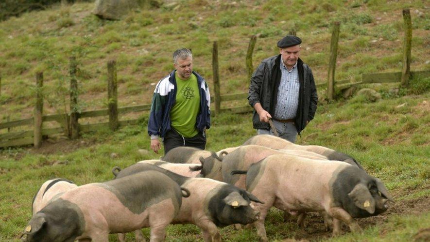 Les fermiers Pierre Oteiza (d) et Michel Ocafrain dans un pré avec leur cochons noirs, à Banca dans la vallée des Aldudes le 19 septembre 2016