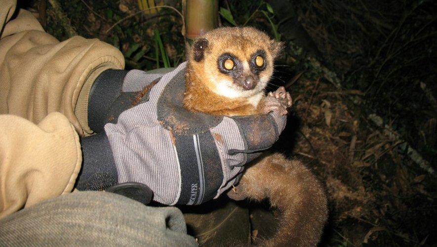 Un lémurien à Madagascar, le 2 mai 2013