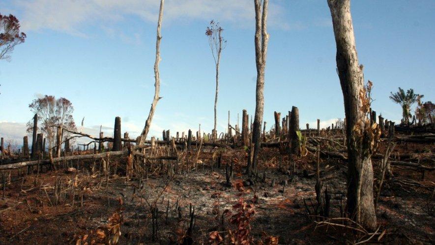 Une forêt de Madagascar brûlée par des agriculteurs, le 11 décembre 2008