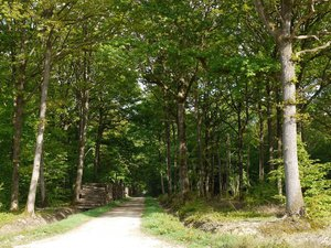 La filière bois s'inquiète pour le renouvellement de la forêt française
