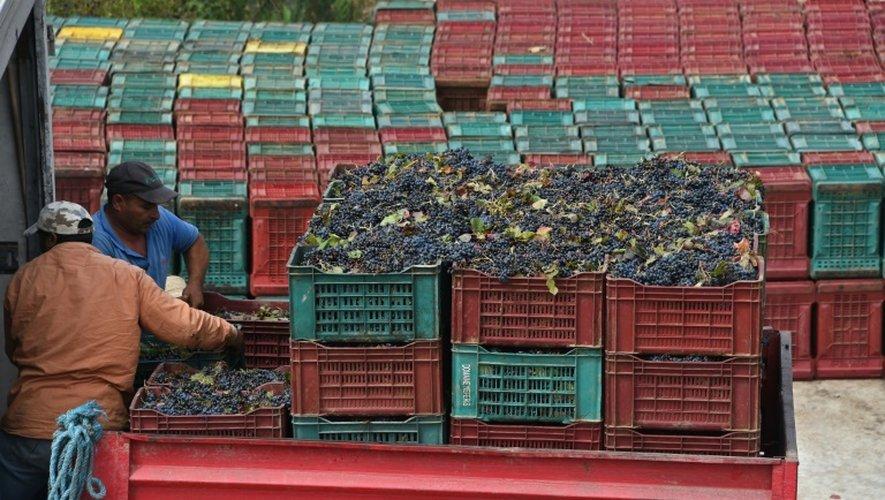 Des ouvriers chargent des cageots de raisins recoltés du vignoble de Neferis, dans la région de Grombalia (40 km sud-est de Tunis), le 16 septembre 2016