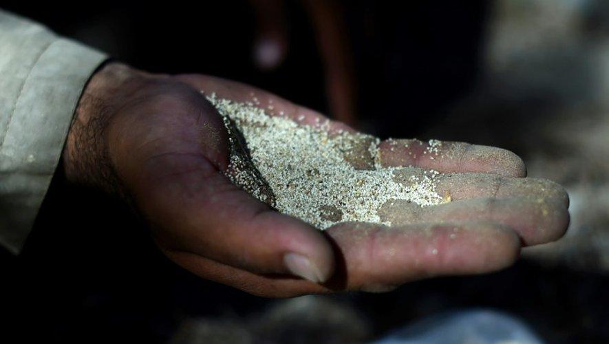 Un fermier afghan montre des graines de pavot à Lashkar Gah, dans le sud de l'Afghanistan, le 4 octobre 2016
