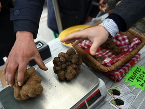 Victime du réchauffement climatique, la truffe se fait rare et chère