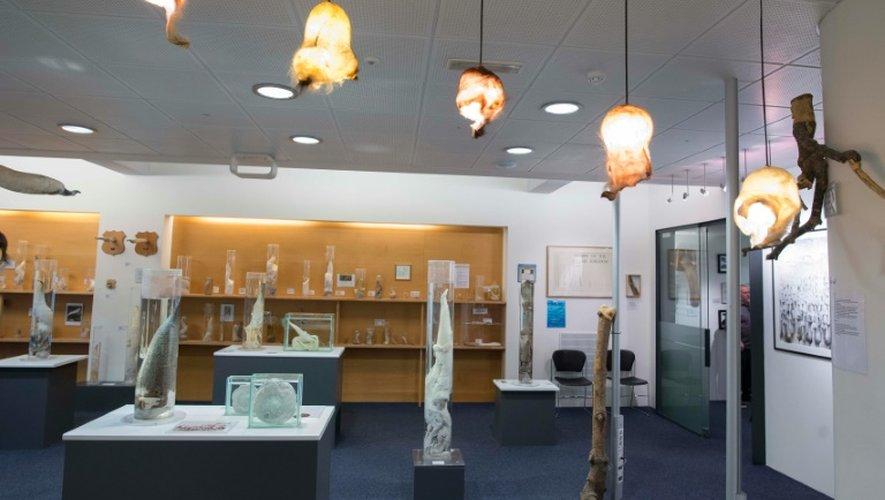 En 2011, la collection familiale du musée du phallus de Reykjavik s'est enrichie d'un pénis humain donné par un coureur de jupons islandais mort à 96 ans