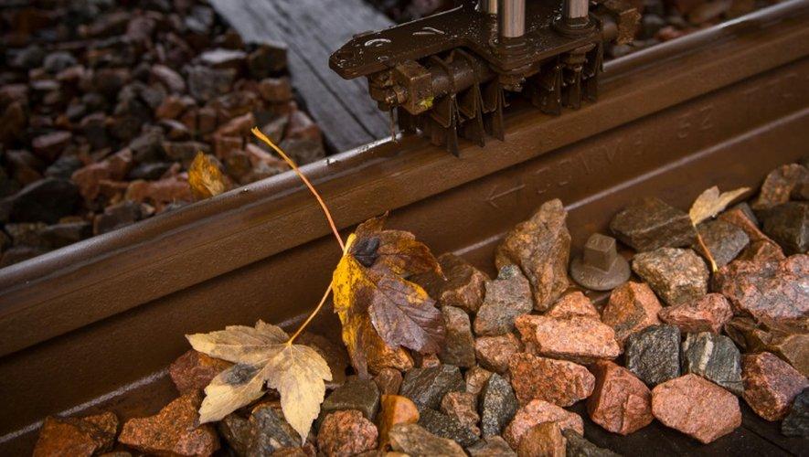 Des feuilles mortes sur la ligne de train entre Saint-Pierre-des-corps et Vierzon, le 18 novembre 2016