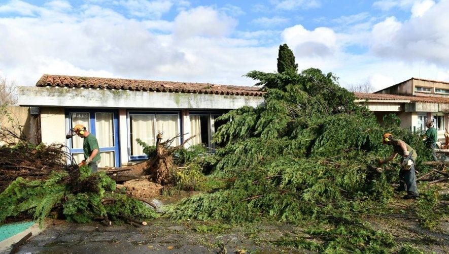 Arbres arrachés lors du passage d'une mini-tornade dans la nuit du 23 au 24 novembre 2016 à Saint-Martin-de-Londres à 30 km au nord de Montpellier