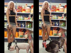 Le cochon de Shakira déguisé pour Thanksgiving!