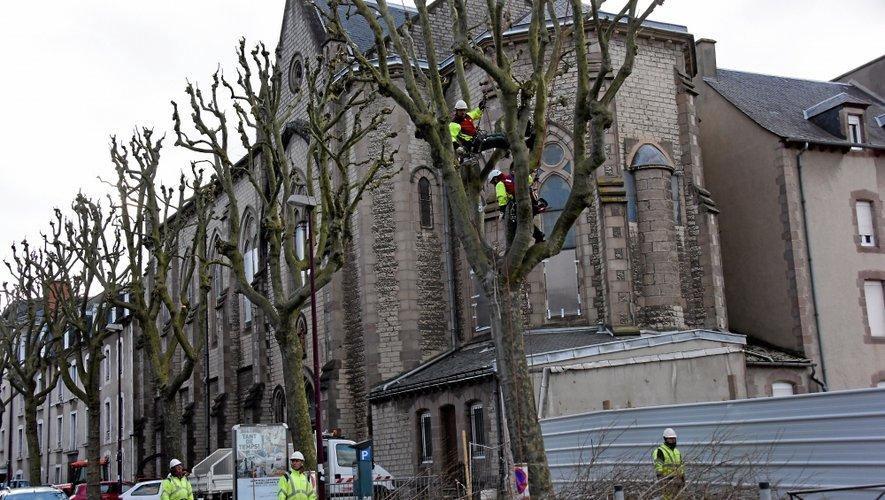 Rodez : c'est parti pour 15 jours d'élagage sur le tour de ville