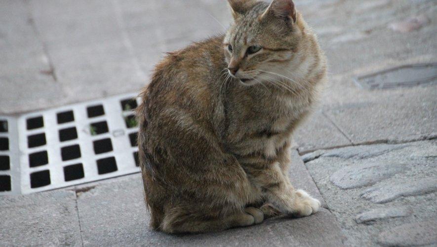Villefranche-de-Rouergue : les captures de chats ont débuté