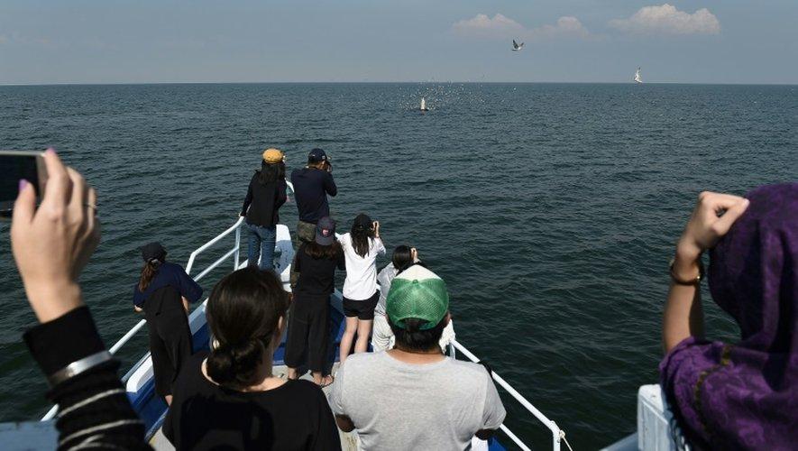 Des touristes observent des baleines dans le golfe de Thaïlande, le 20 novembre 2016