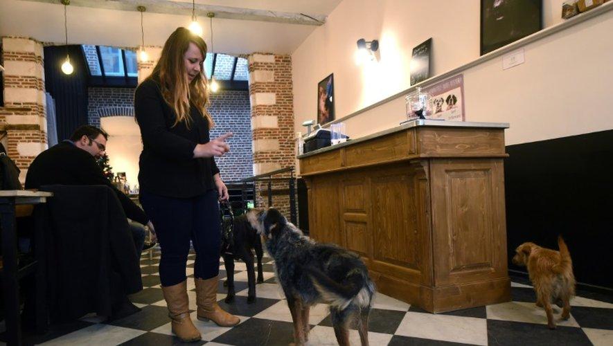 """Une employée du """"Waf"""" joue avec l'un des chiens adopté dans un refuge associatif, le 9 décembre 2016 à Lille"""