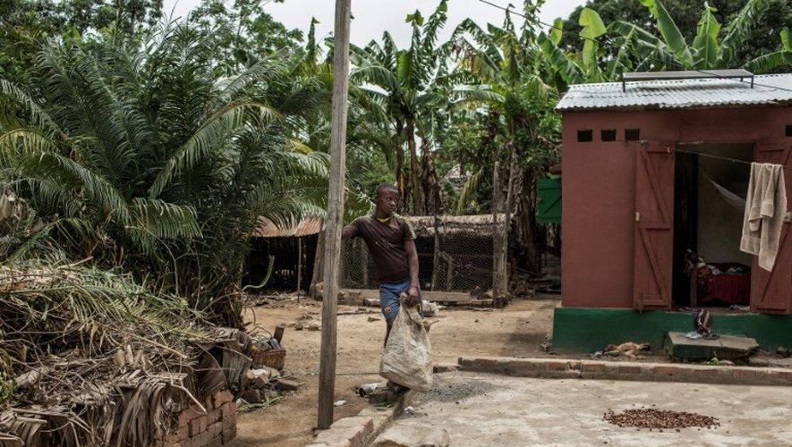 Une plantation de cacao à Ambanja, à Madagascar, le 29 novembre 2016