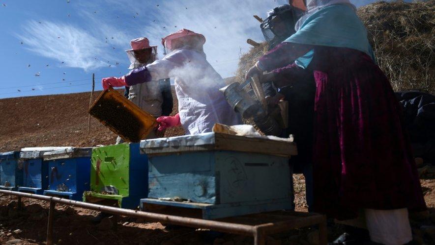 Des apicultrices afghanes de la minorité hazara travaillent dans la coopérative de Yakawlang, dans le centre de l'Afghanistan, le 5 novembre 2016